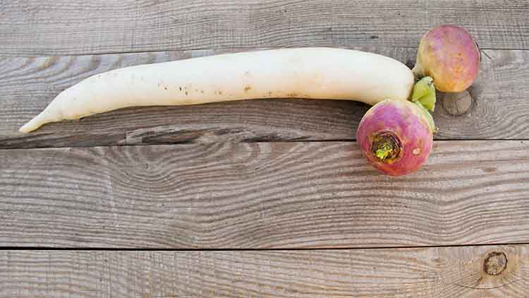 One long white daikon radish and two chinese watermelon radish on rustic wooden table