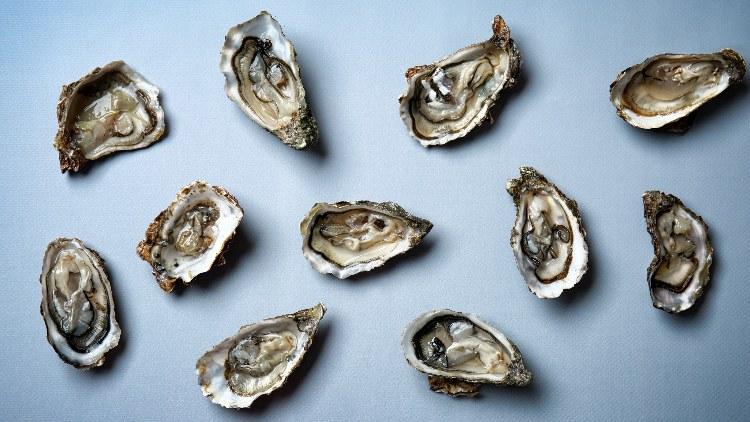 Fresh raw oysters on grey background